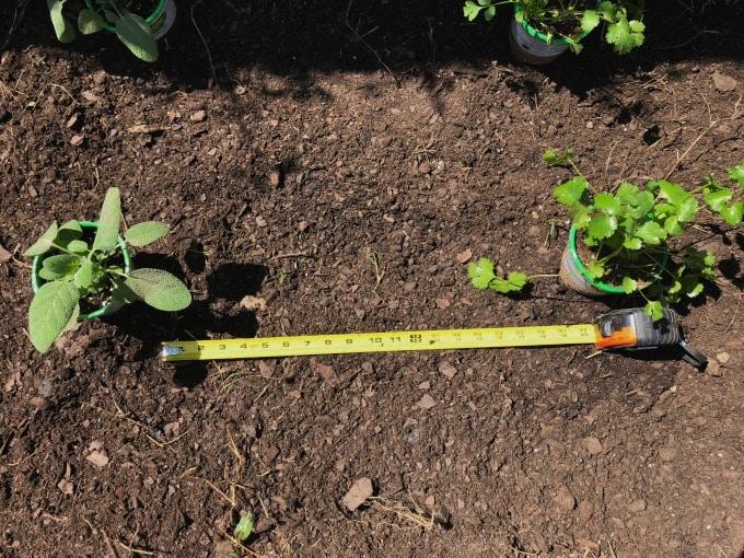 Harvest Organics Plants